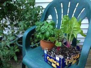 image of tomato plant