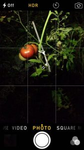 tomatogrid